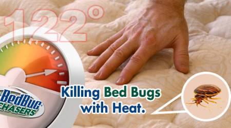 KillingBedBugsWithHeat