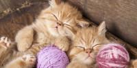 gatos-adorables-y-productividad