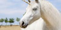 Qué son los unicornios empresariales y otros animales mitológicos corporativos